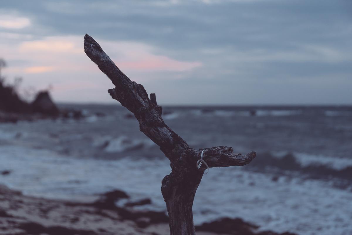 The Branch.jpg