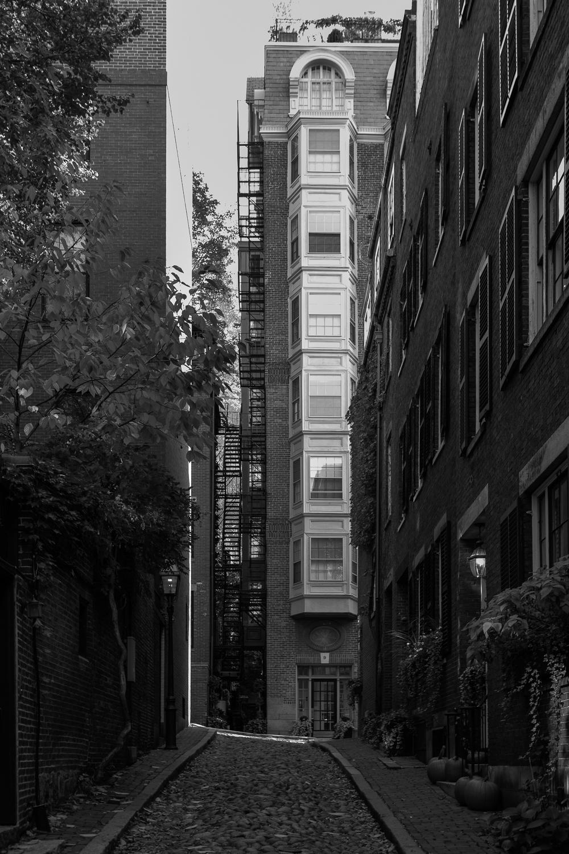 Acorn Alley.jpg