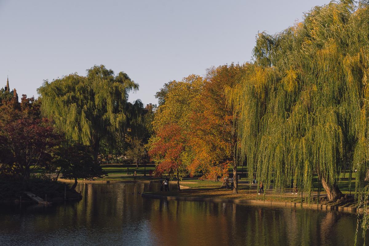 Fall in Public Garden.jpg