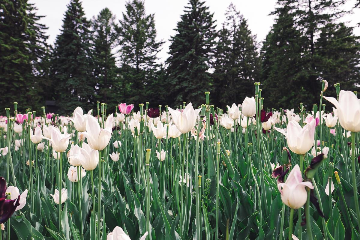 Botanical Flowers.jpg