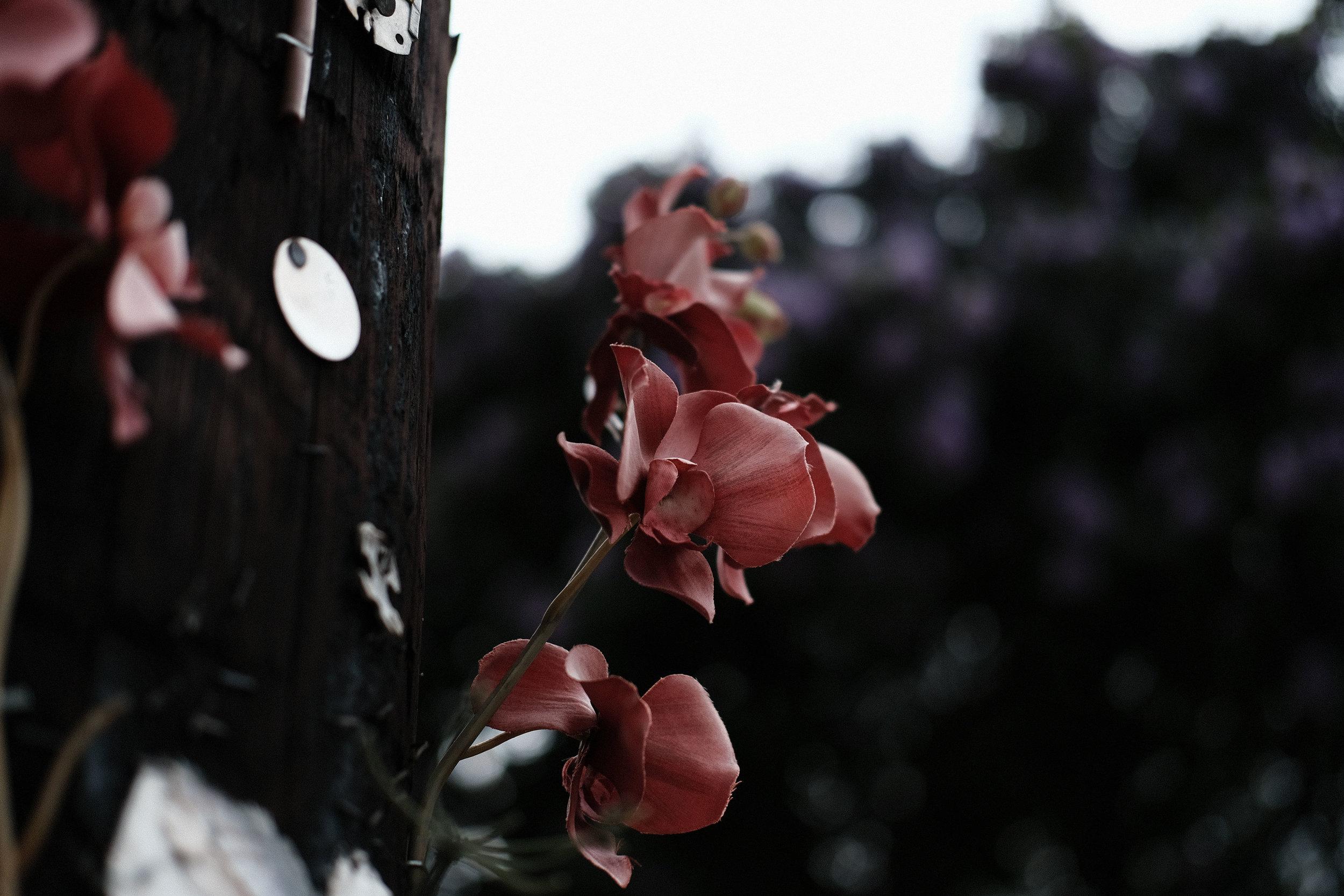 Pole Rose.jpg