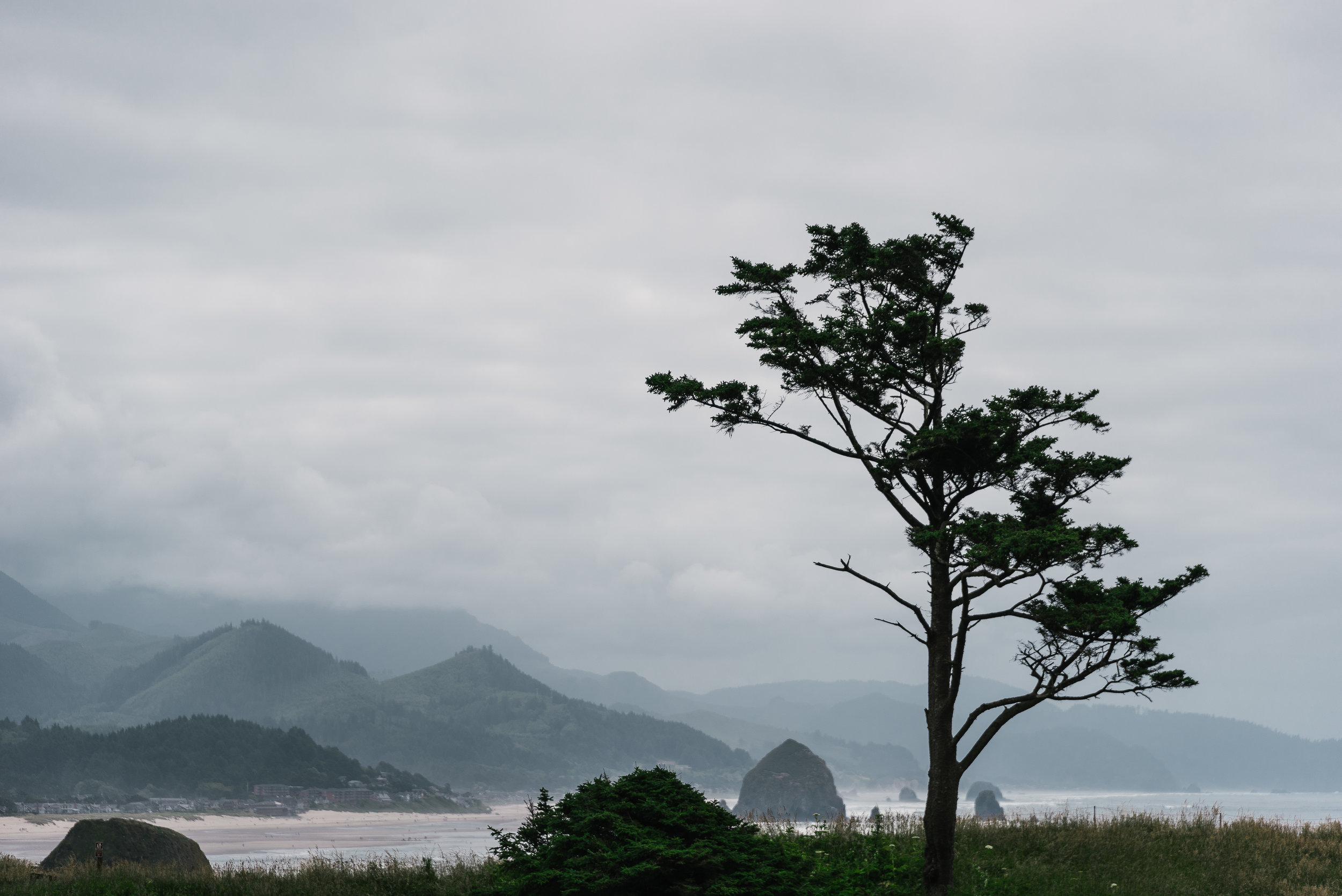 Cannon Beach Tree III-2974.jpg