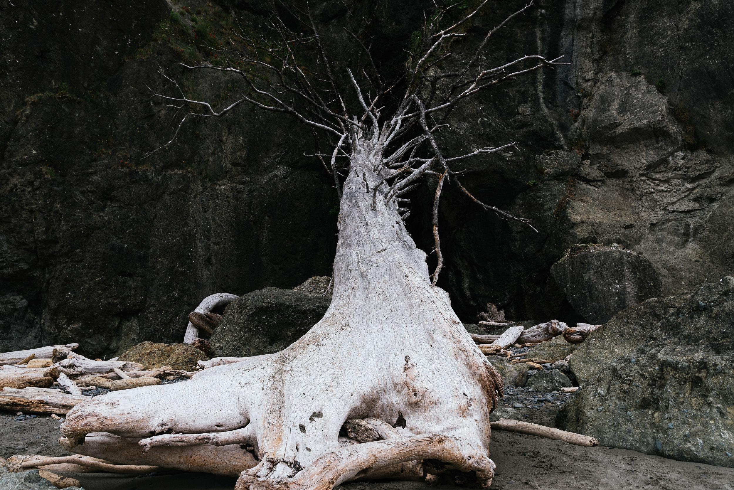The Branch-3307.jpg