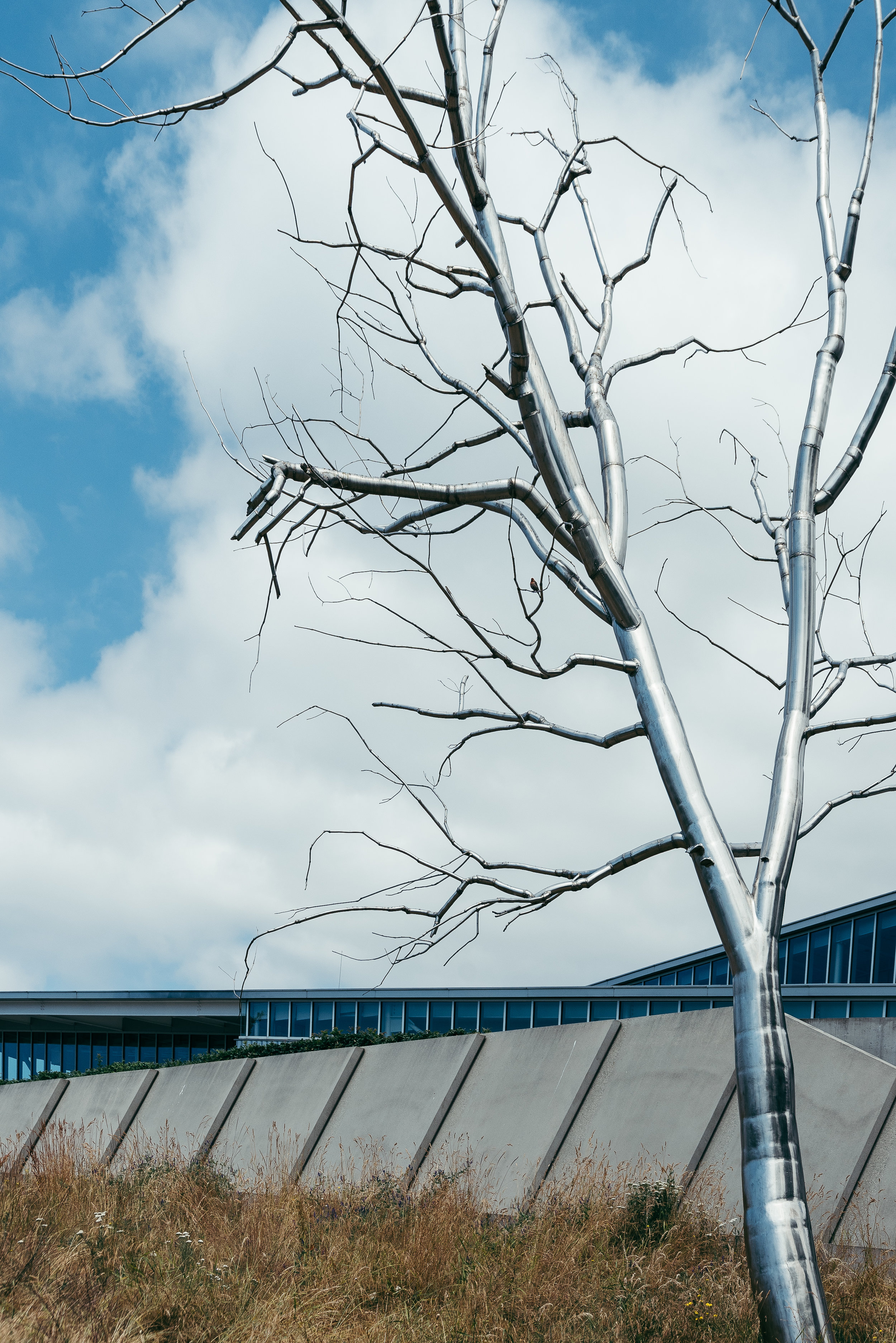 tree-3776.jpg
