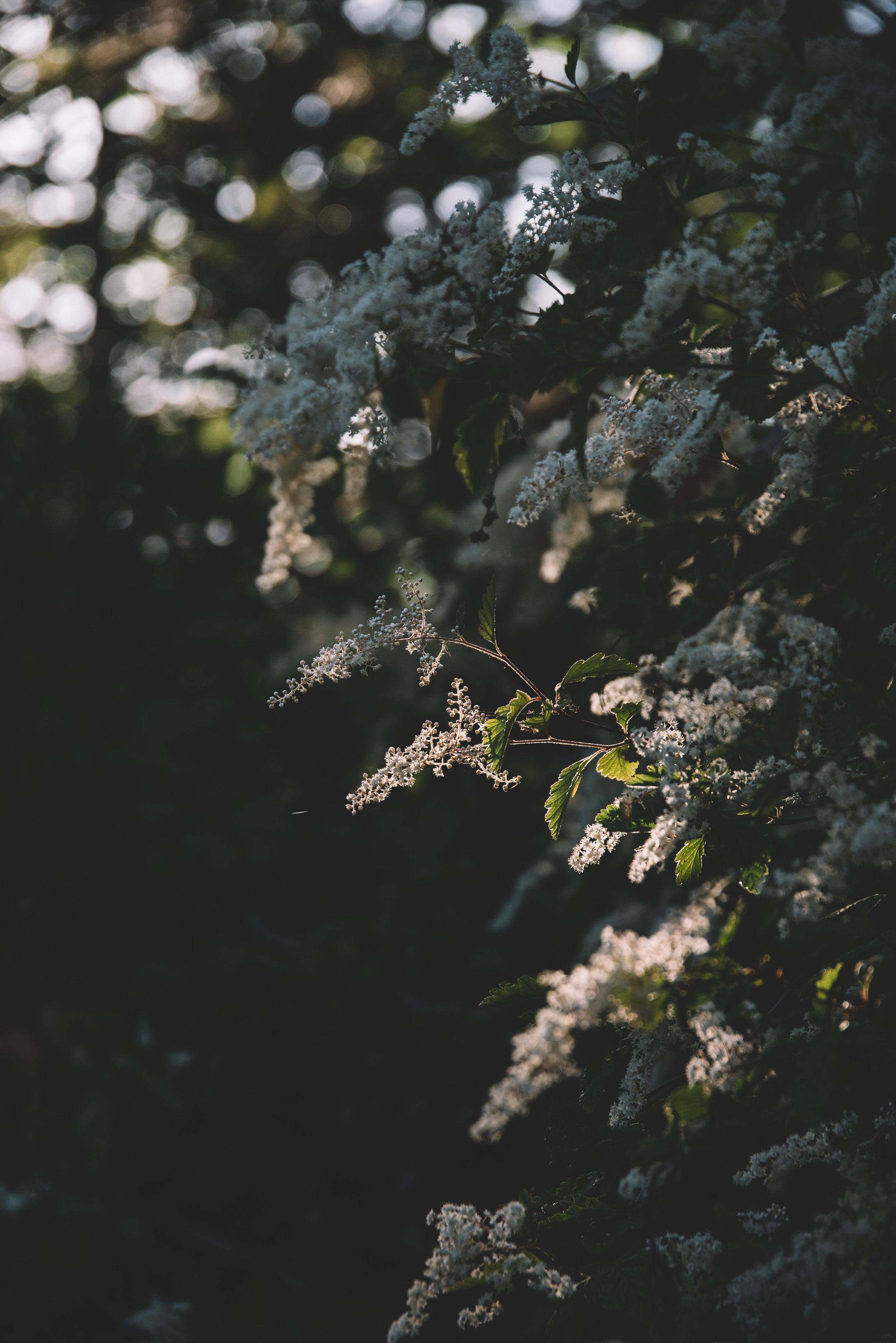 Cabin Flowers-3473.jpg