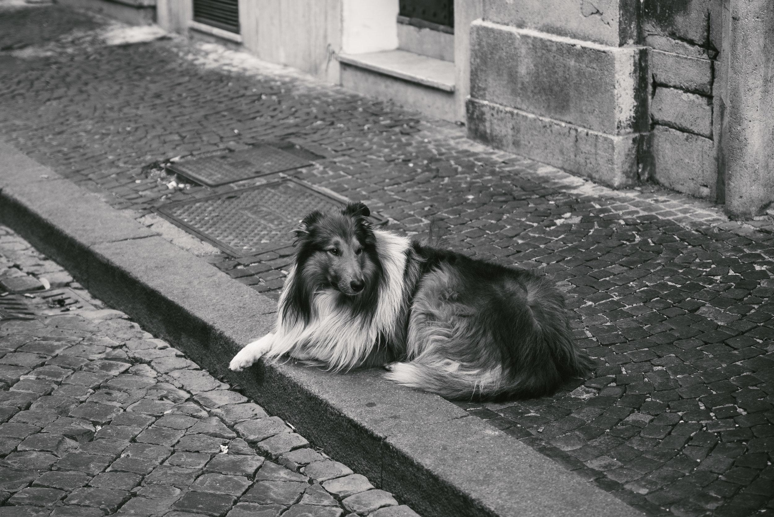 Rome Doge.jpg