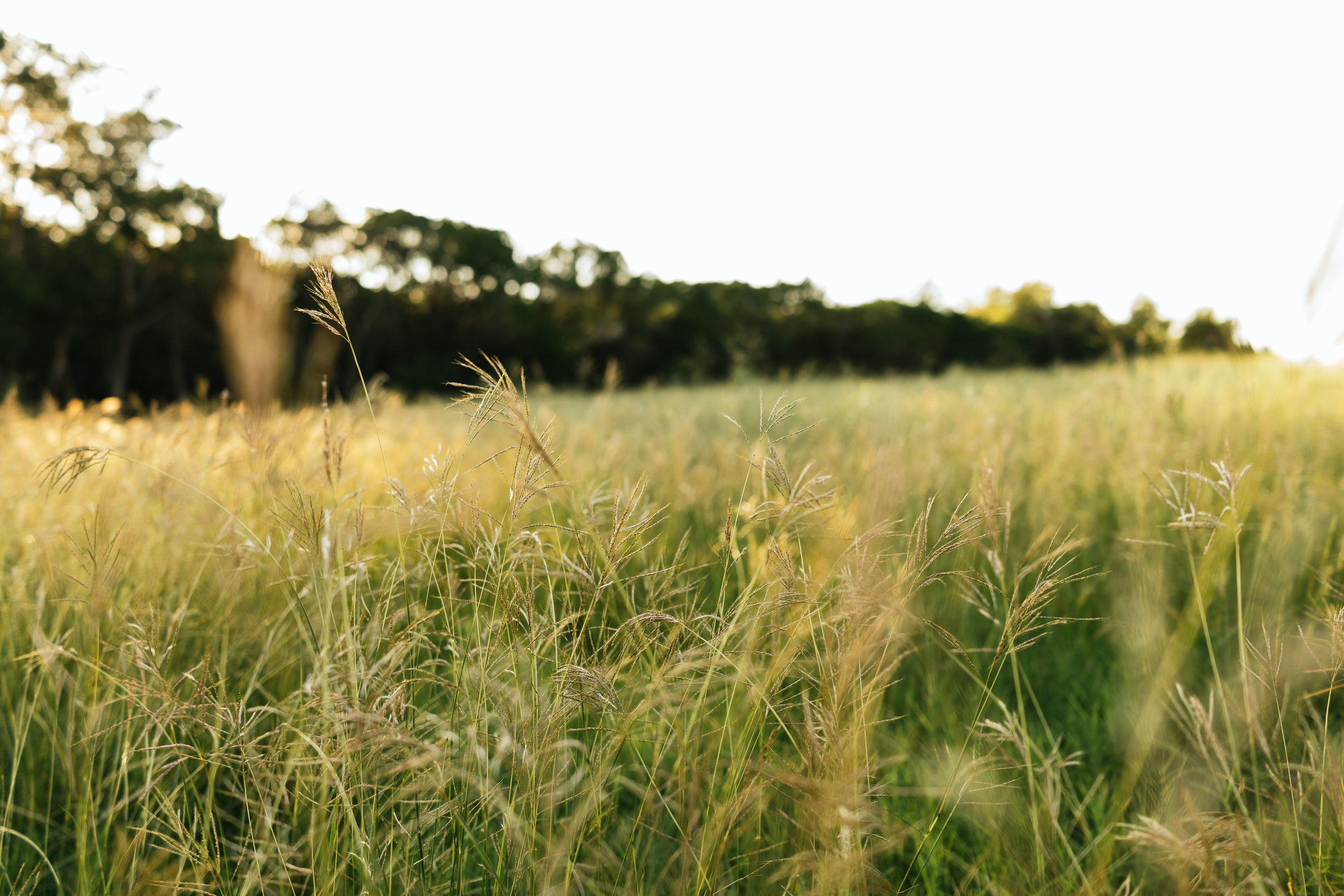 In A Austn Texas Field.jpg