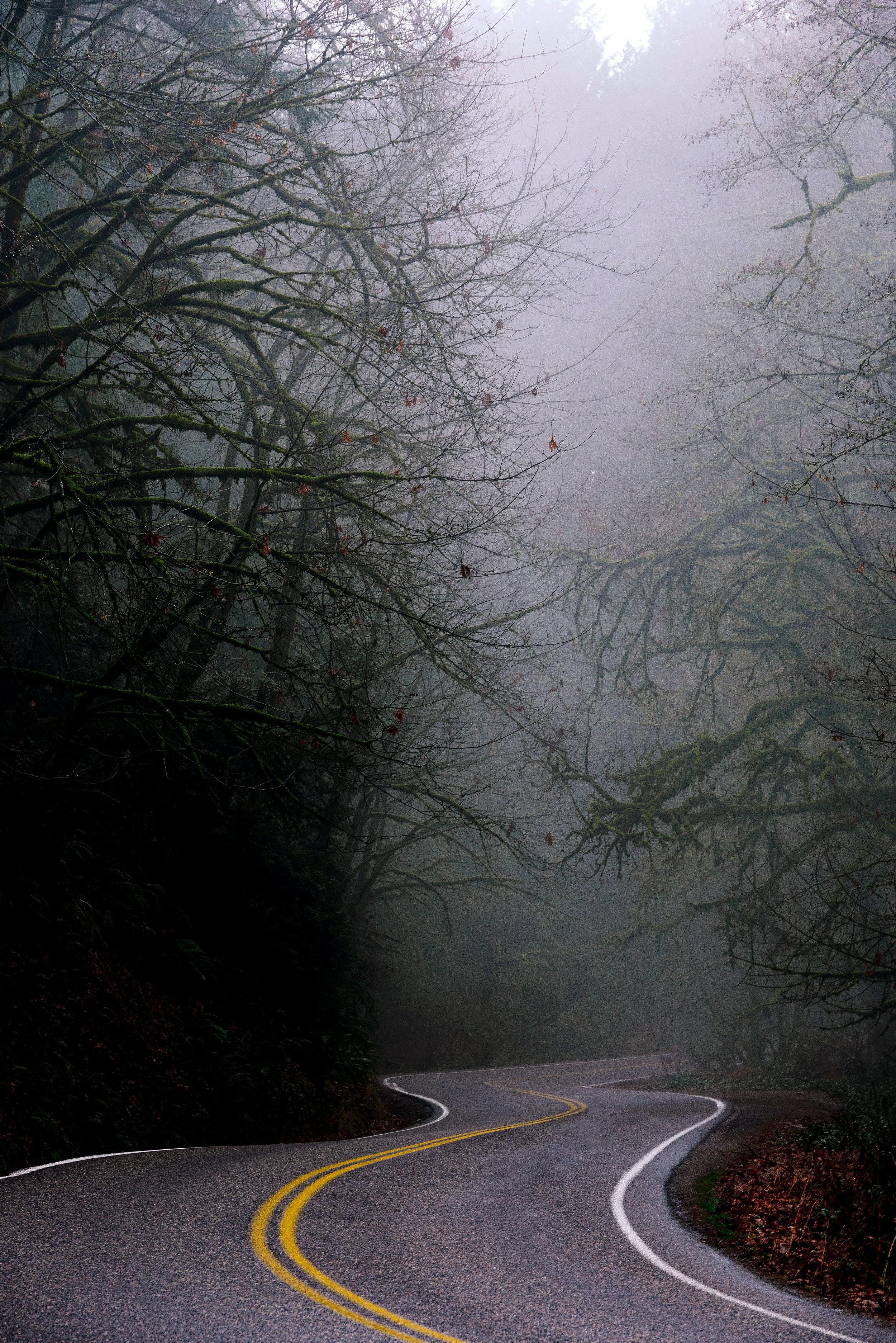 Foggy Drive.jpg