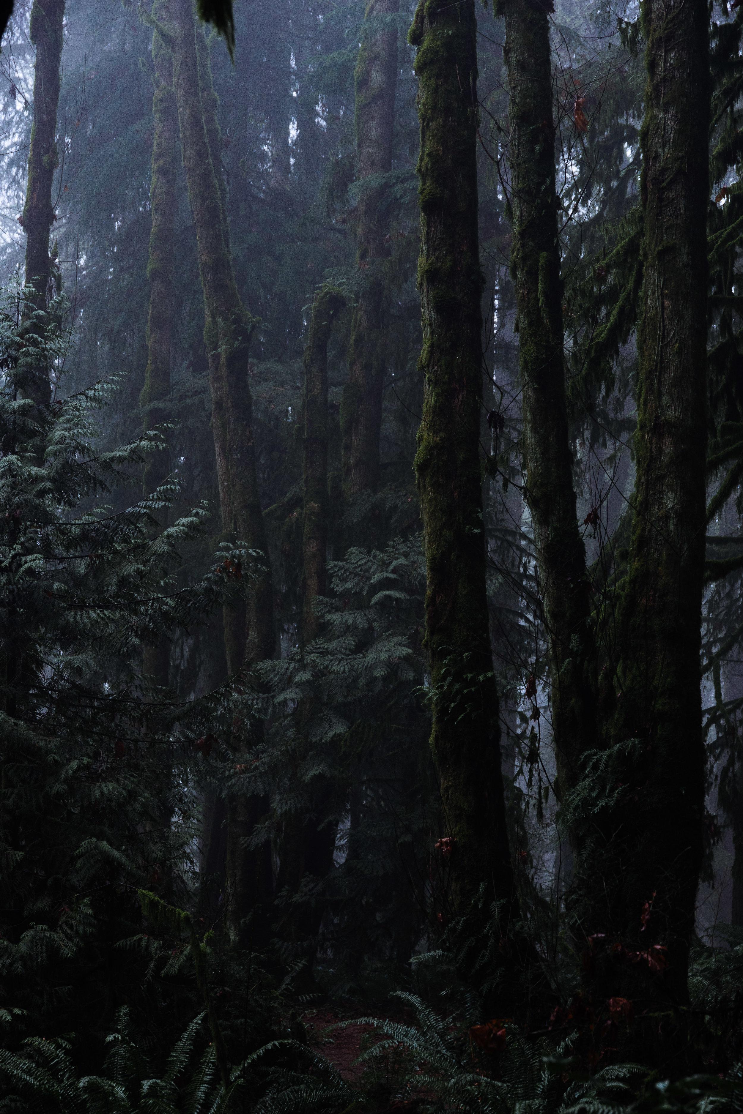 Moody Woods.jpg