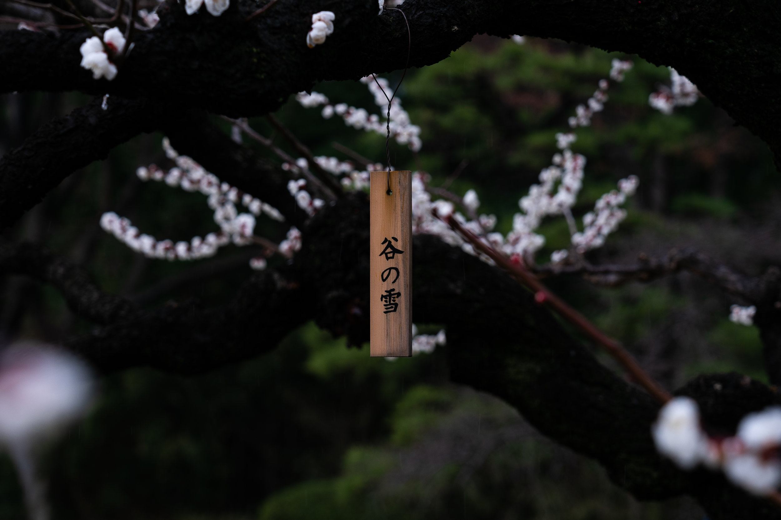 Hamarikyu gardens.jpg