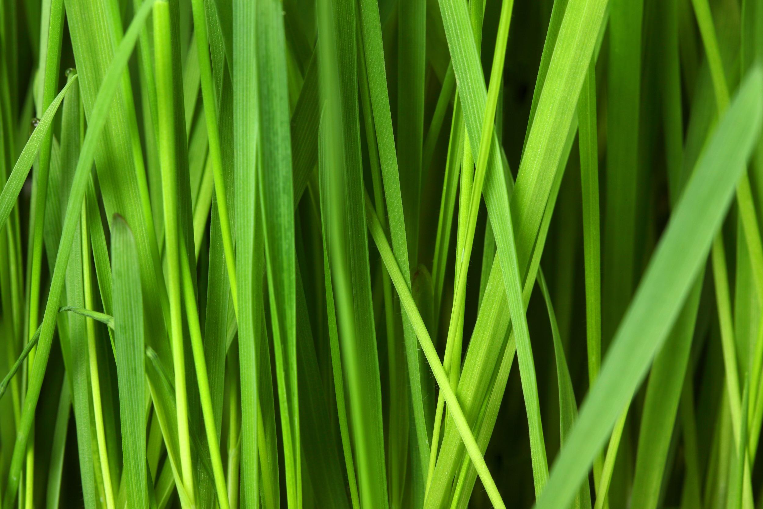 grass_background_188723.jpg