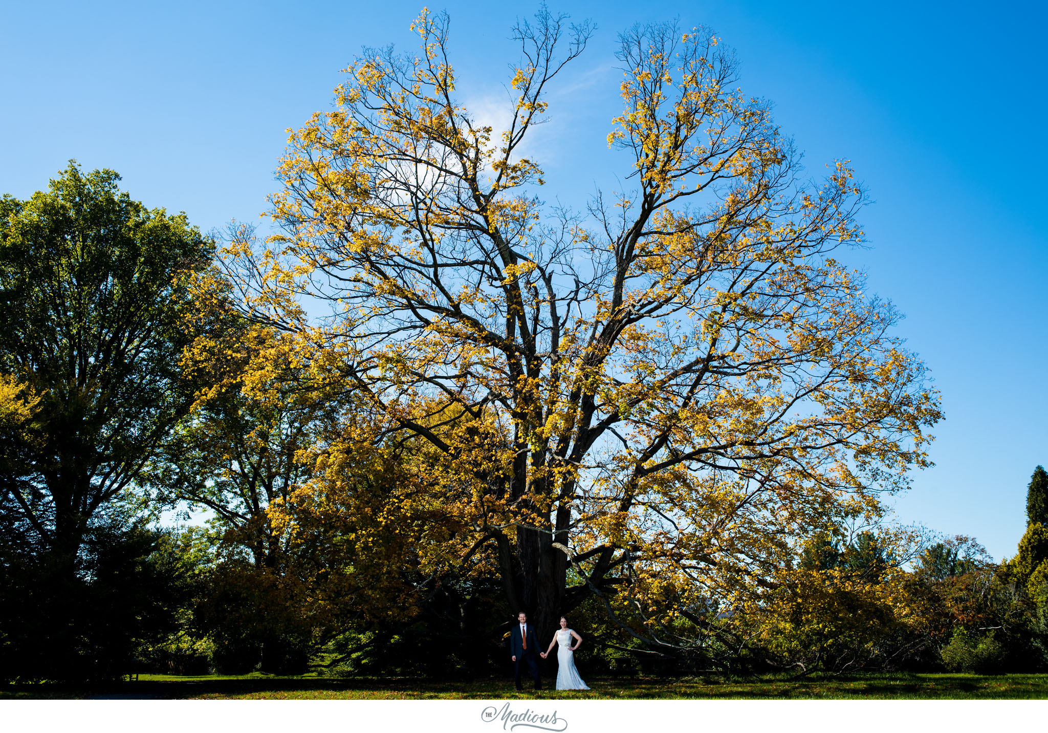 Cylburn Arboretum wedding bride groom tree