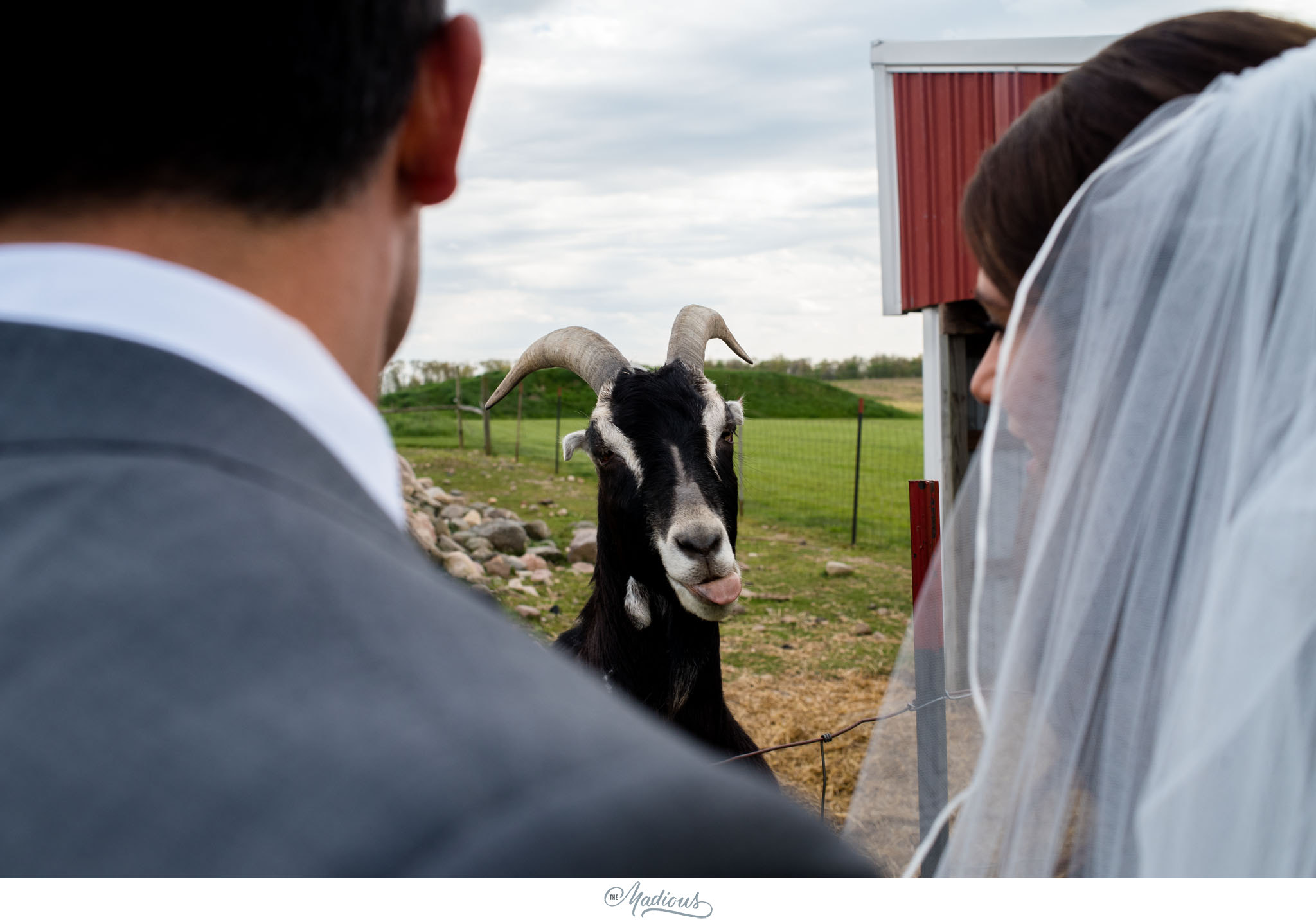 Ann Arbor Michigan Nixon Farms wedding_0032.JPG