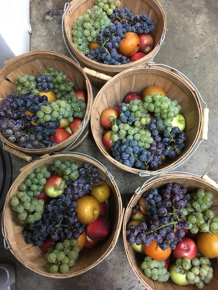fruitinbasket.jpg