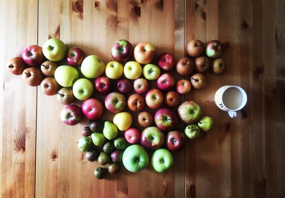 fruitUSA.jpg