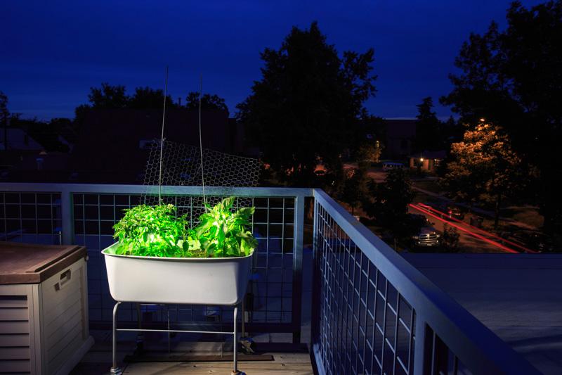 GROW_Staver_urban_garden_Denver_photographer_009.JPG