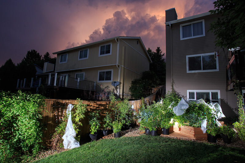 GROW_Staver_urban_garden_Denver_photographer_011.JPG