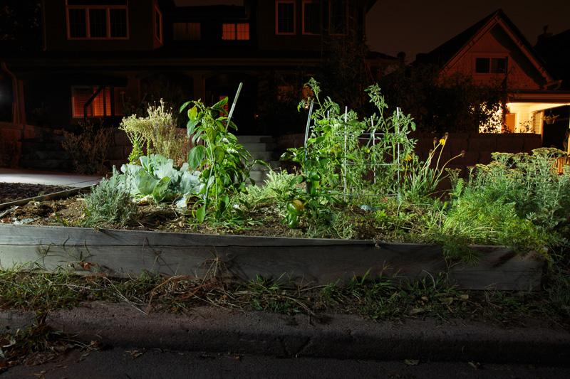 GROW_Staver_urban_garden_Denver_photographer_015.JPG