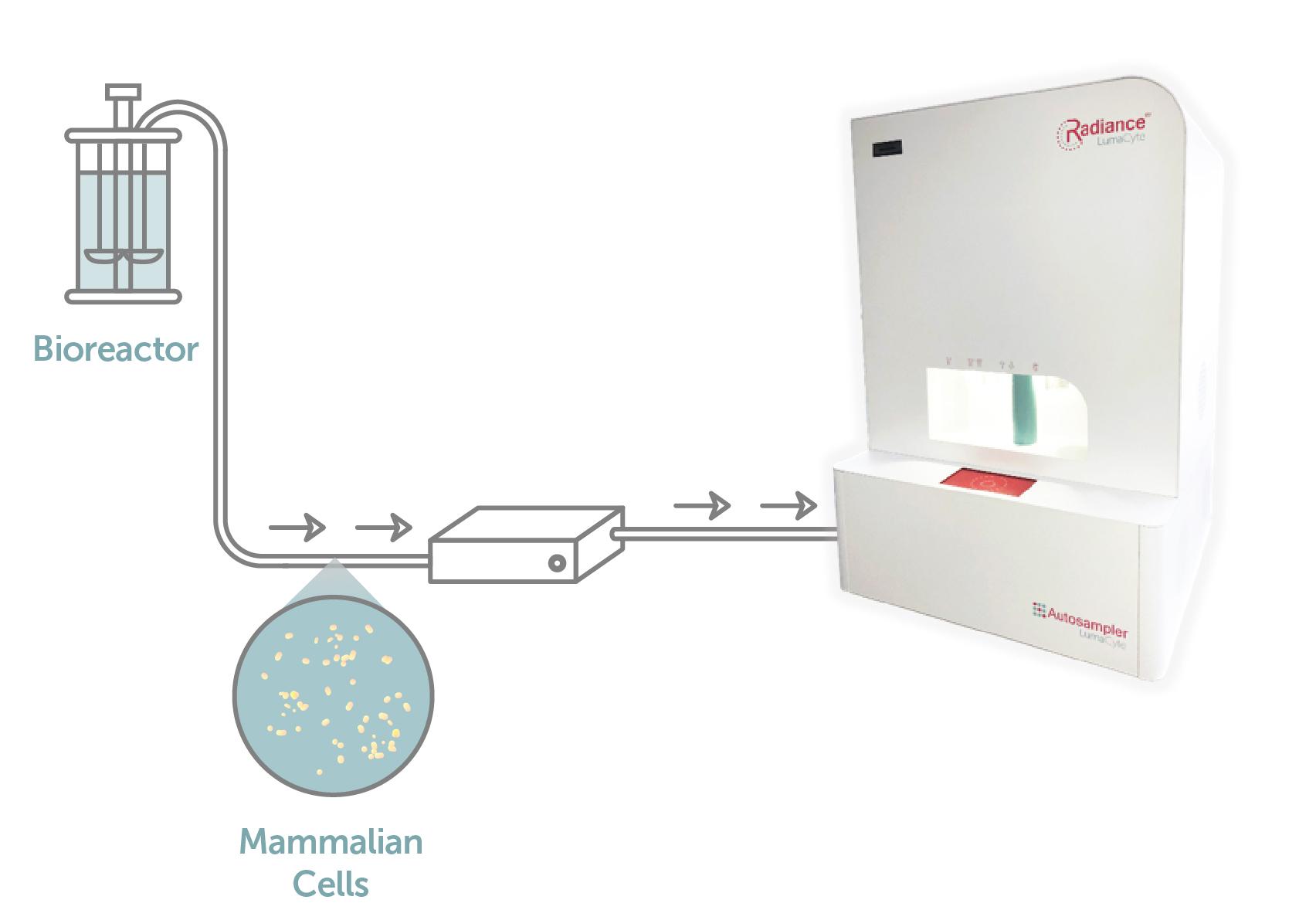 Biomanufacturing_image.jpg