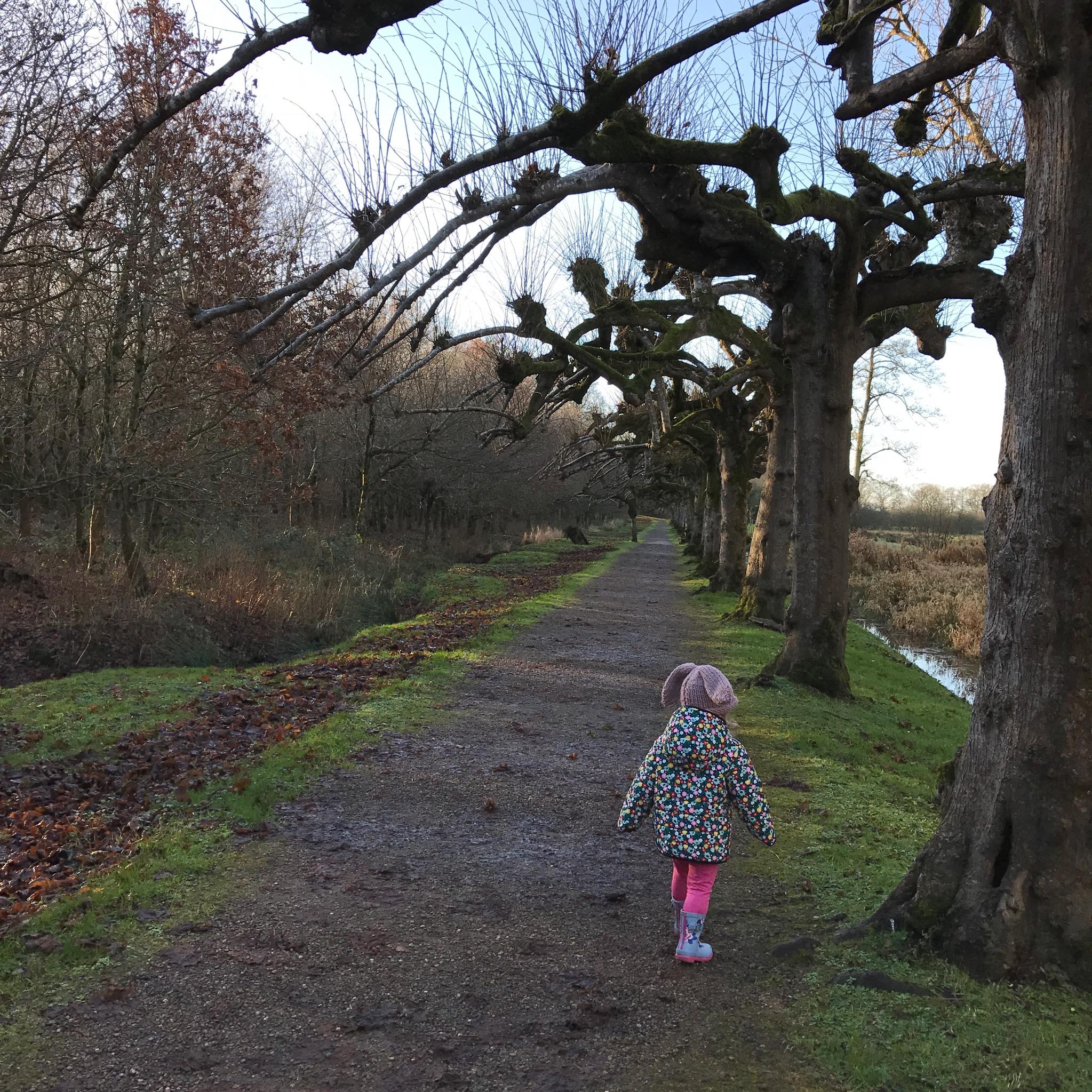 Magical Limetree walk