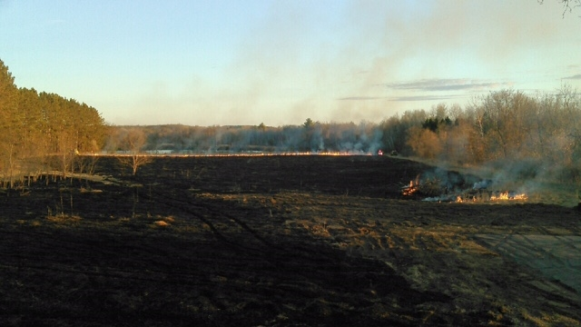 The field is burned slowly by the local fire department. Each 'burn line' is controlled by a crewman with a fuel canister in hand and water nearby for safety. Photo by Bruce Foss.