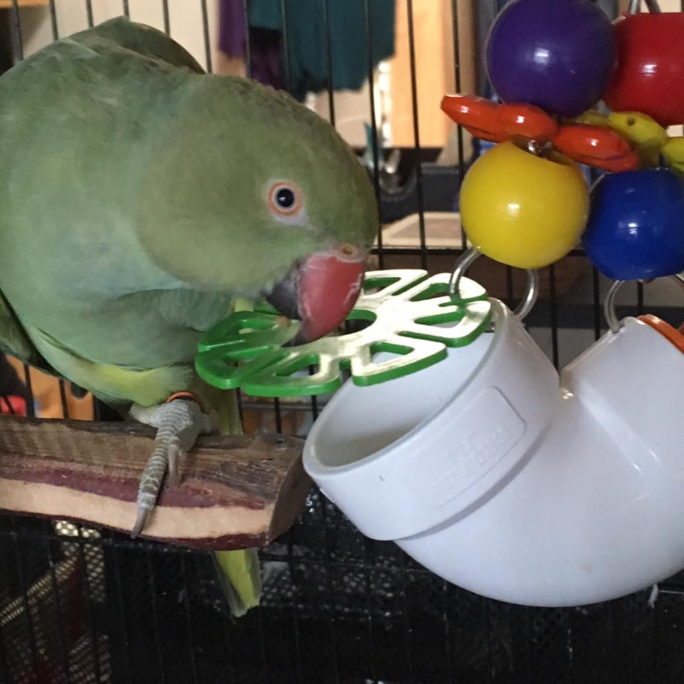 kaleo foraging toy.jpg