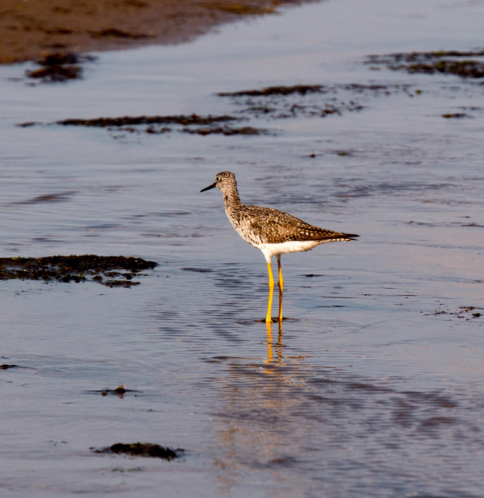 Bird on Parlee Beach, New Brunswick.