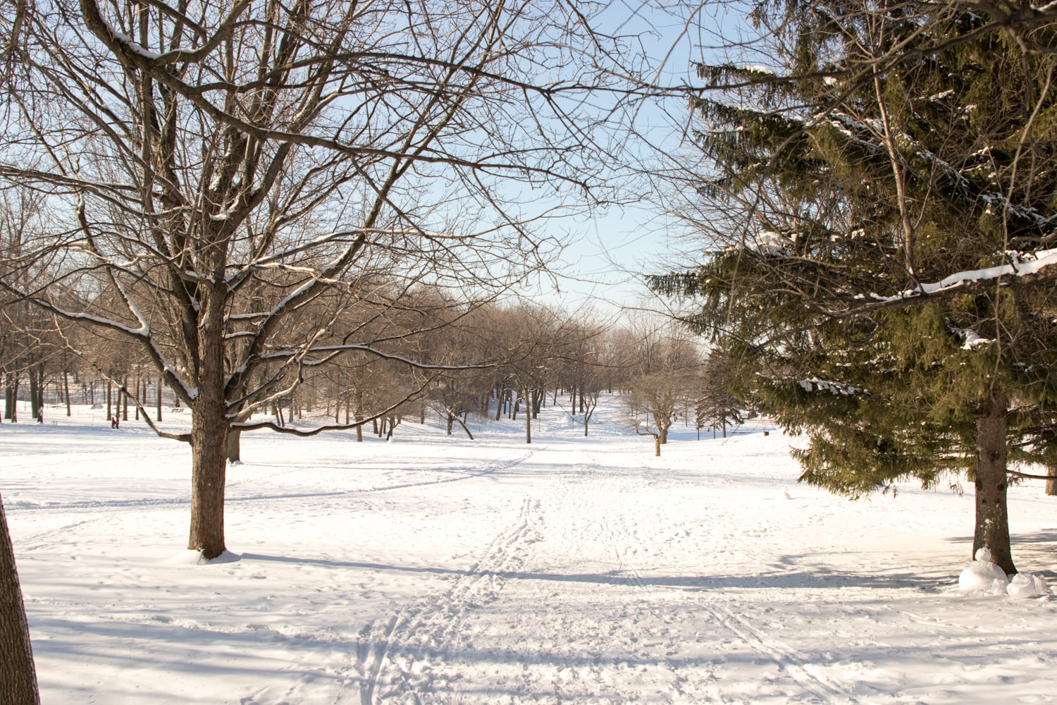 Mount Royal Park covered in snow.