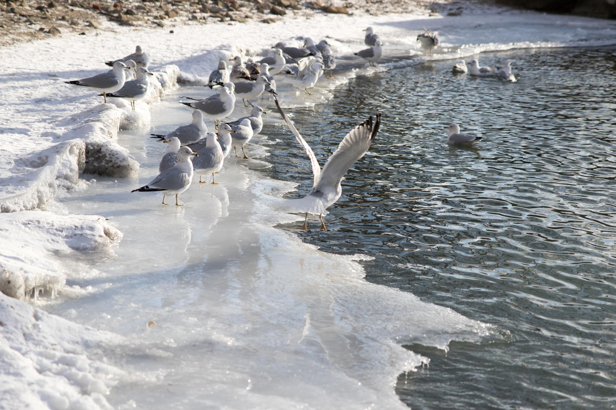 Birds on thin ice