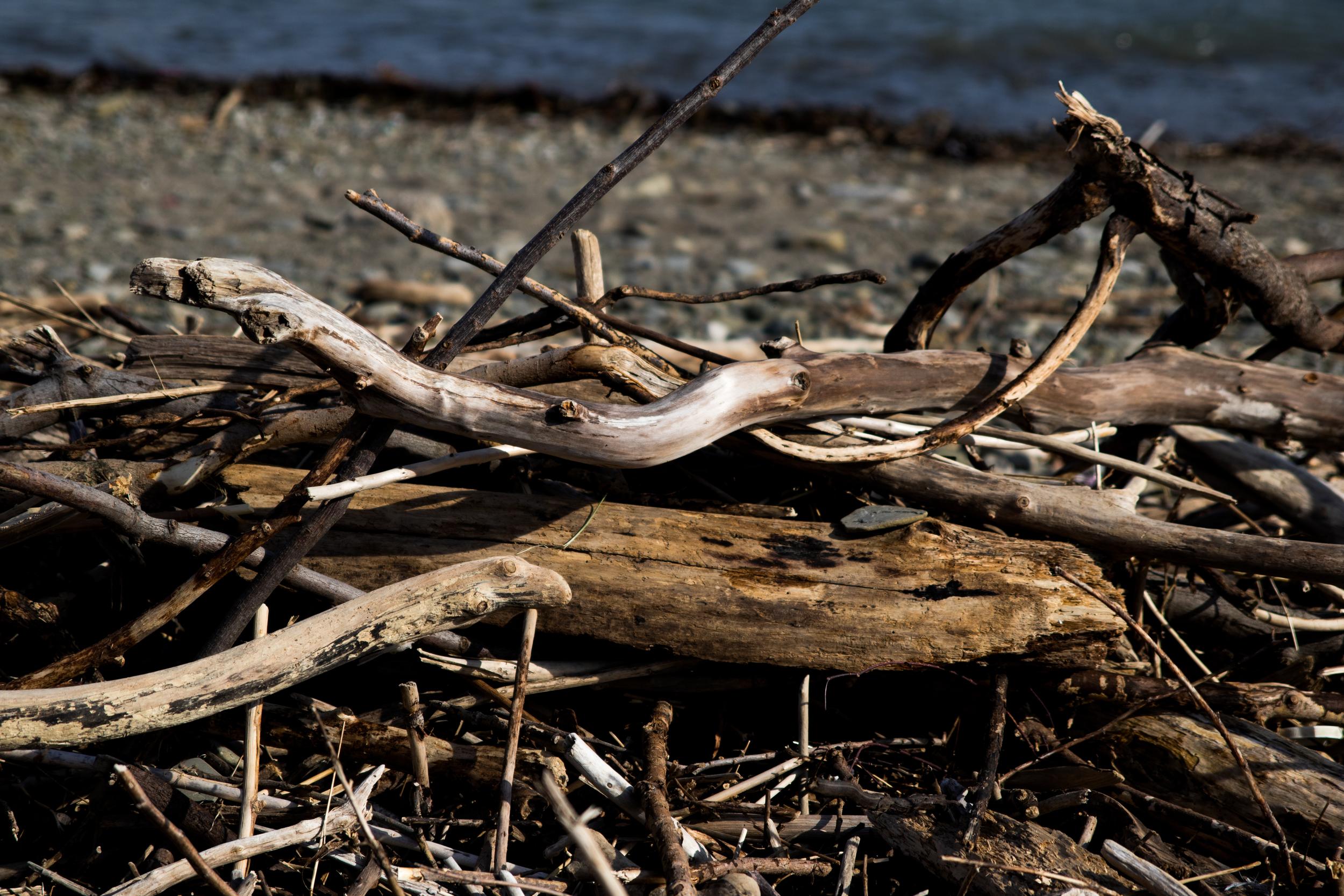 Driftwood on Toronto beach.
