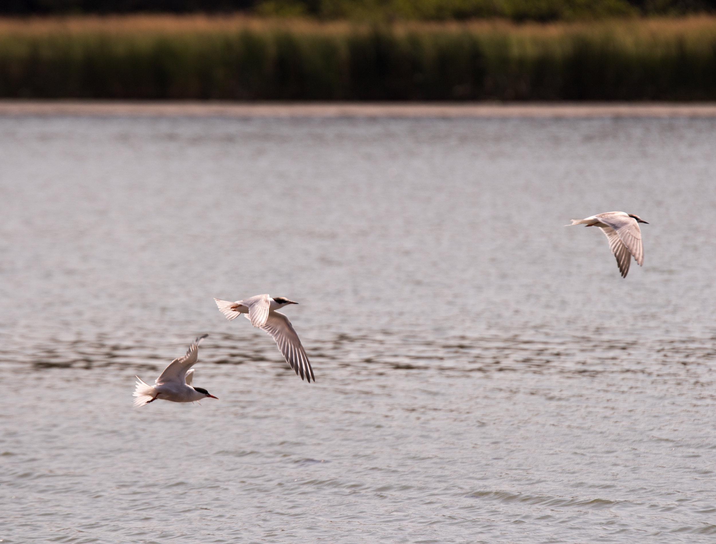 Birds at Parlee Beach New Brunswick