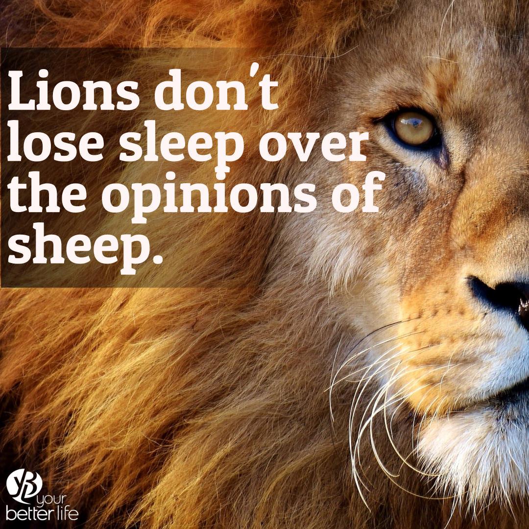 lions sleep.jpg