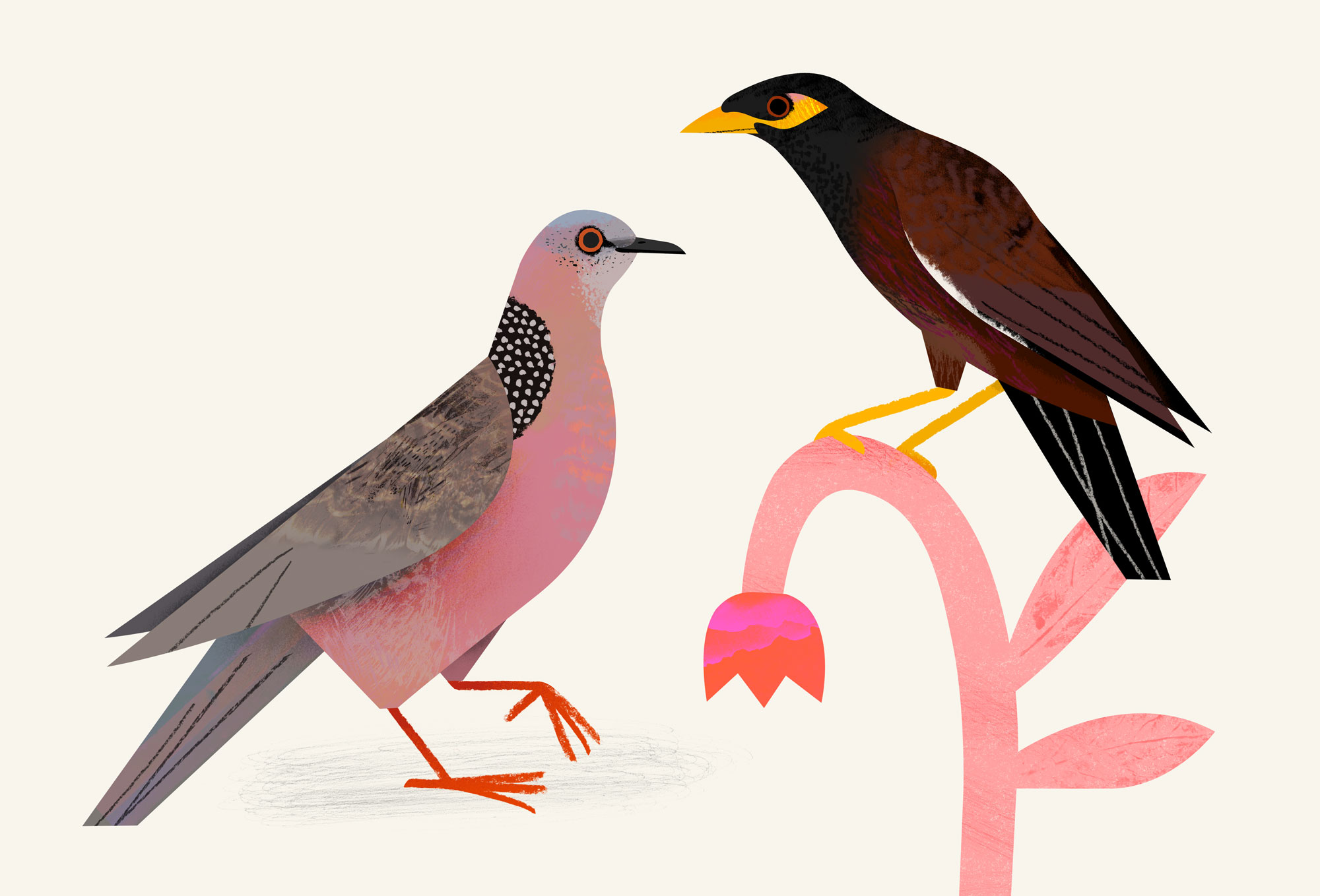 common-myna-and-spotted-dove-by-Natasha-Durley.jpg