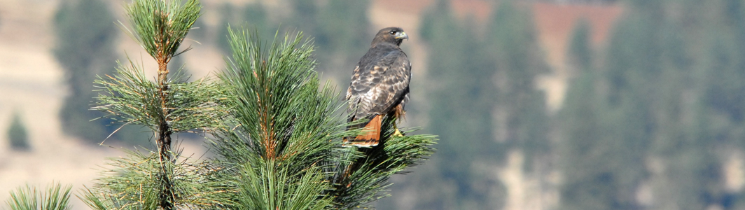 Birding in Ferry County promises rich rewards!