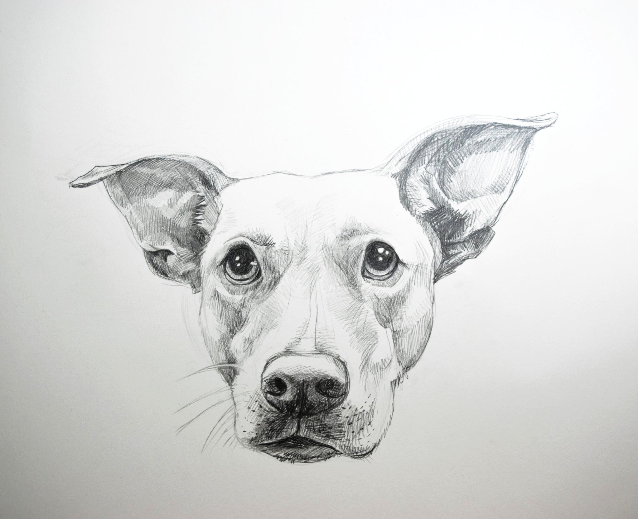 remi-drawing.jpg