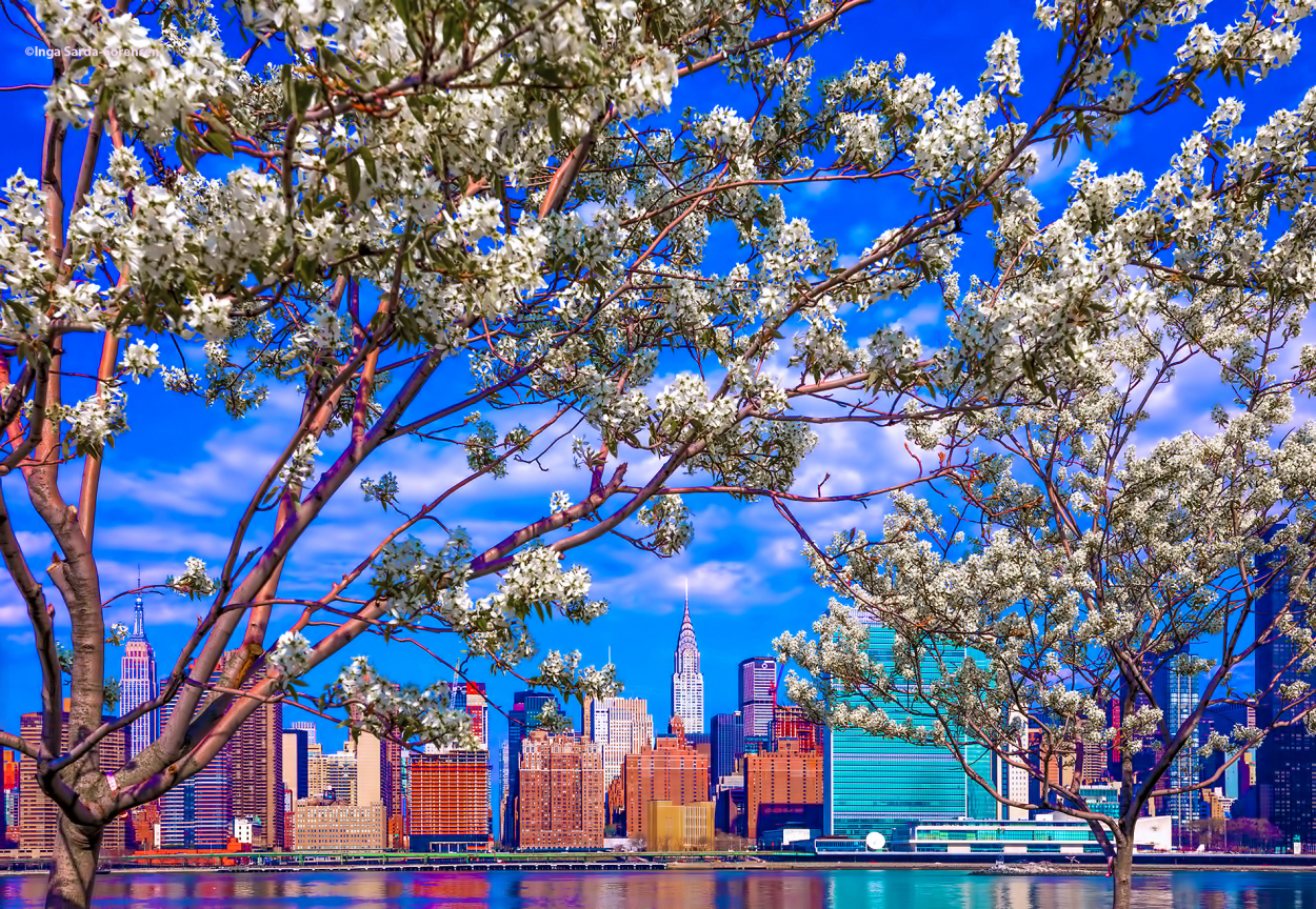 tp-midtown-blossoms-april-2017-nyc.jpg