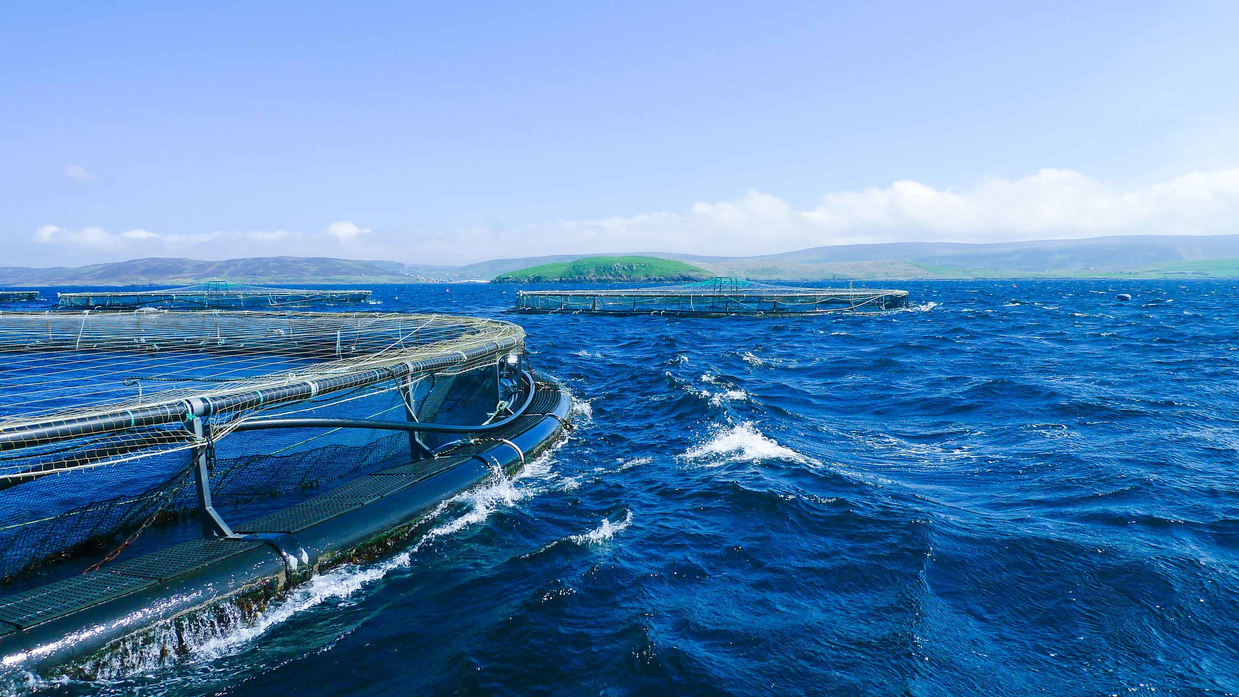 Providing the Best Natural & Sustainable Seafood from Around the World