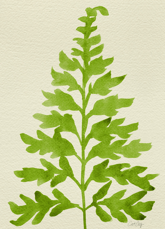 Lime Fern available  here .