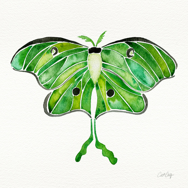 Luna Moth available  here .