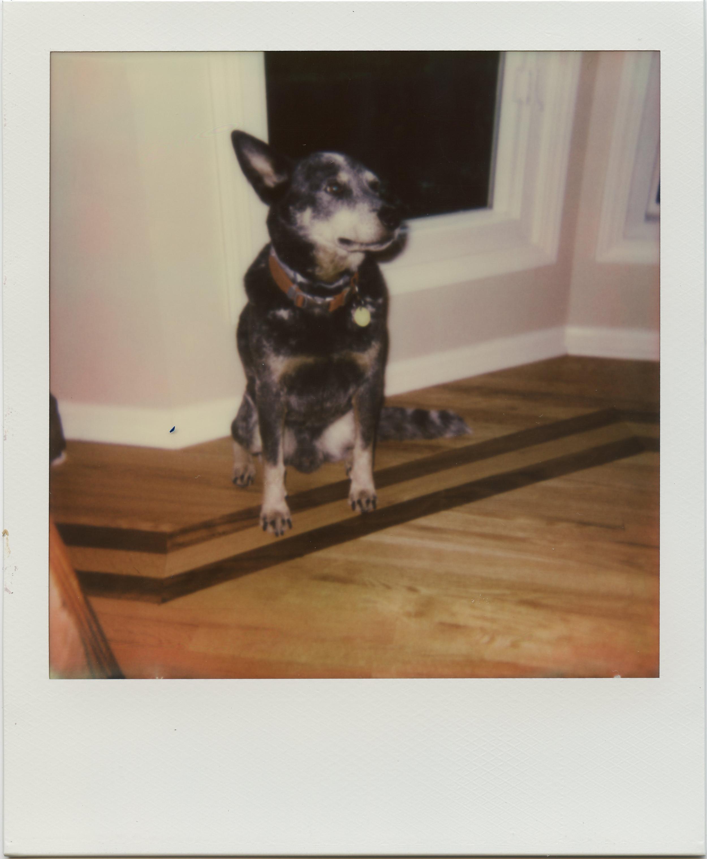 Polaroid-StoicJack.jpg