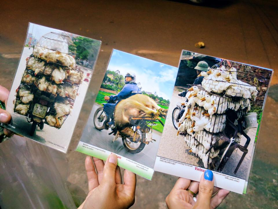 """Aaaaand the winner for """"Worst Postcard Selection Ever"""" goes to... this little shop in Hoi An, Vietnam! Nothing says paradise like animals en route to slaughter. (Still, it's a refreshing break from the generic sunset photos.) Oh, & yes– we bought all three."""