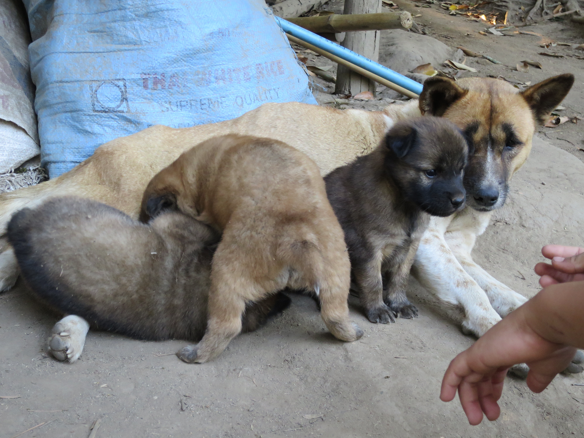 I found a little boy playing with these puppies, so I joined him.