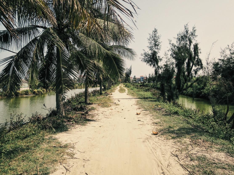Biking along the rice paddies...