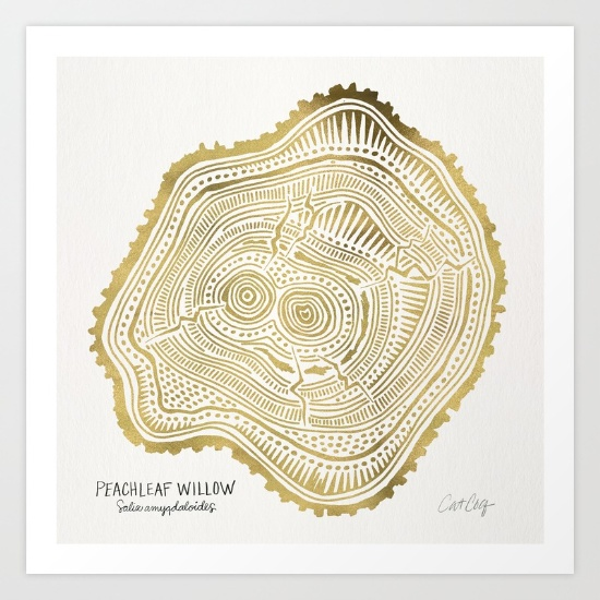 Peachleaf Willow  •  art print $18–$65