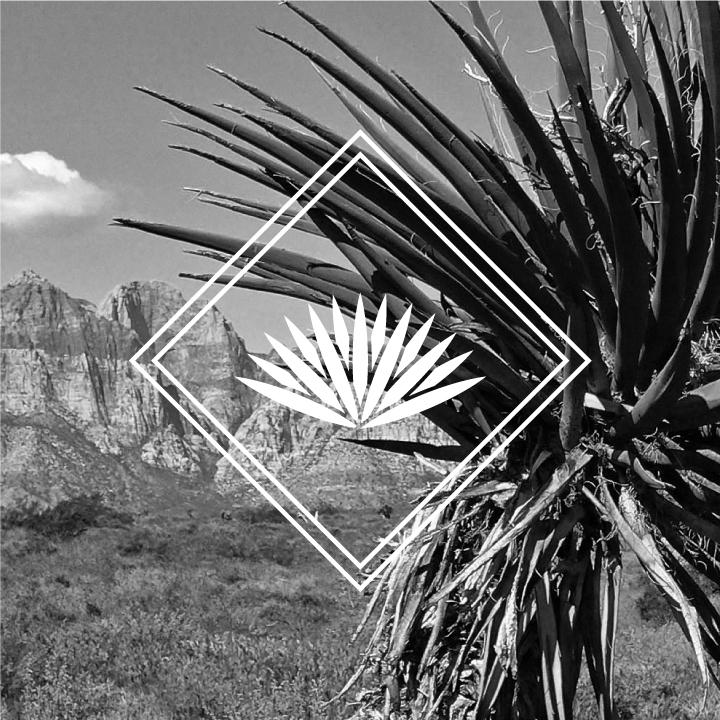 Yucca-Web-2.jpg