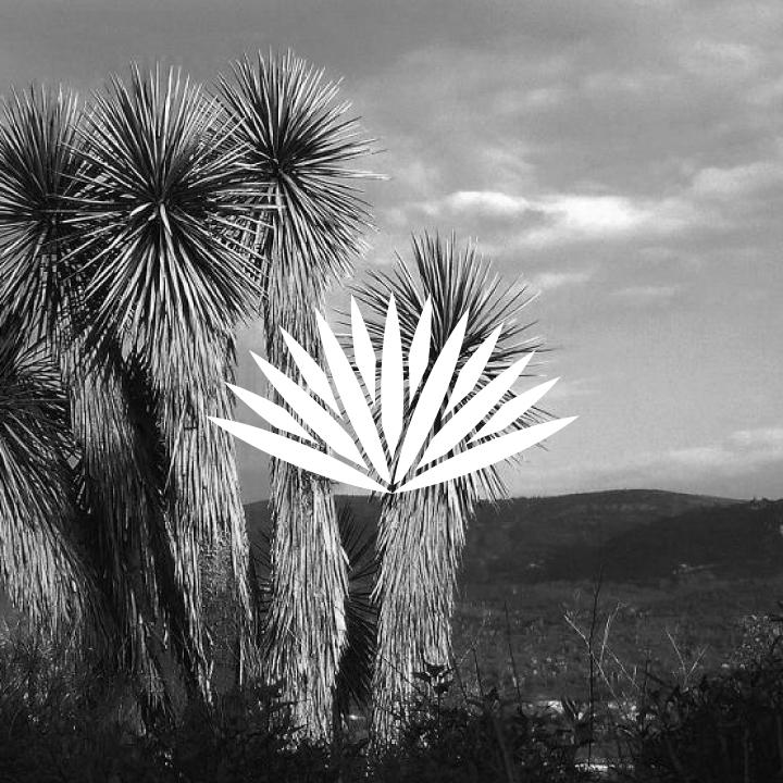 Yucca-Web-4.jpg