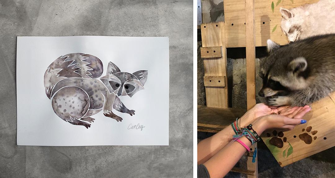 Raccoon12.jpg