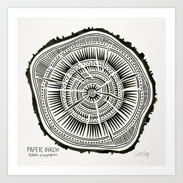 paper-birch--black-tree-rings-sv7-prints.jpg