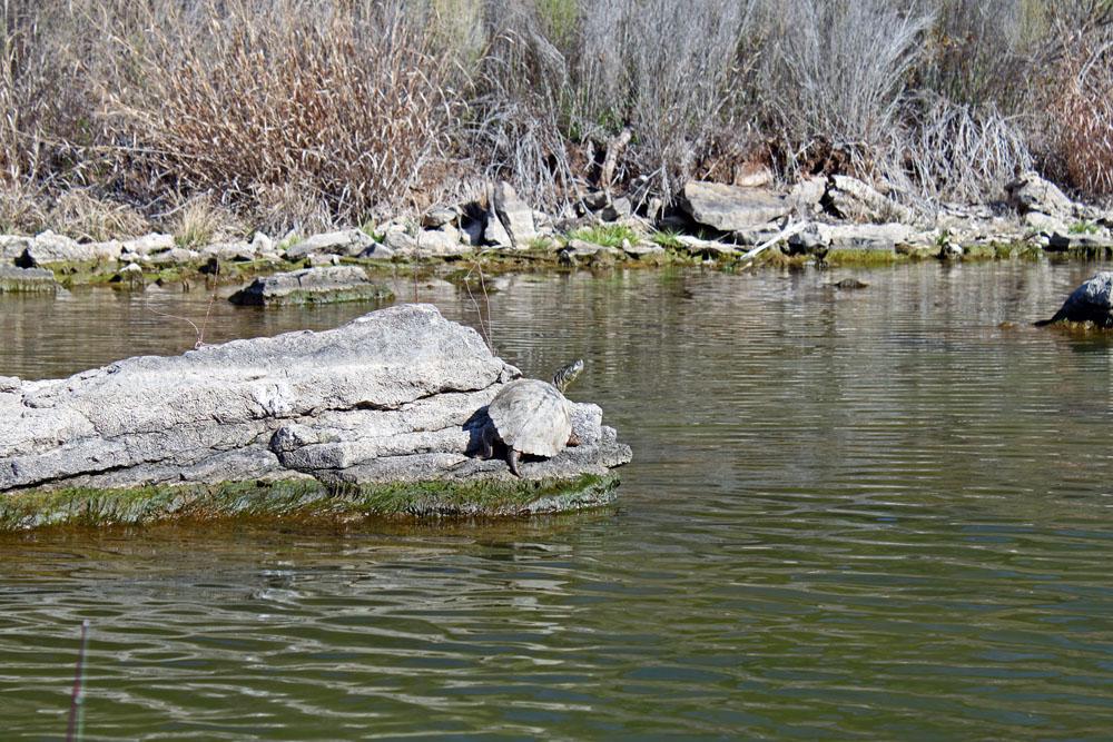 Brazos River Fishing