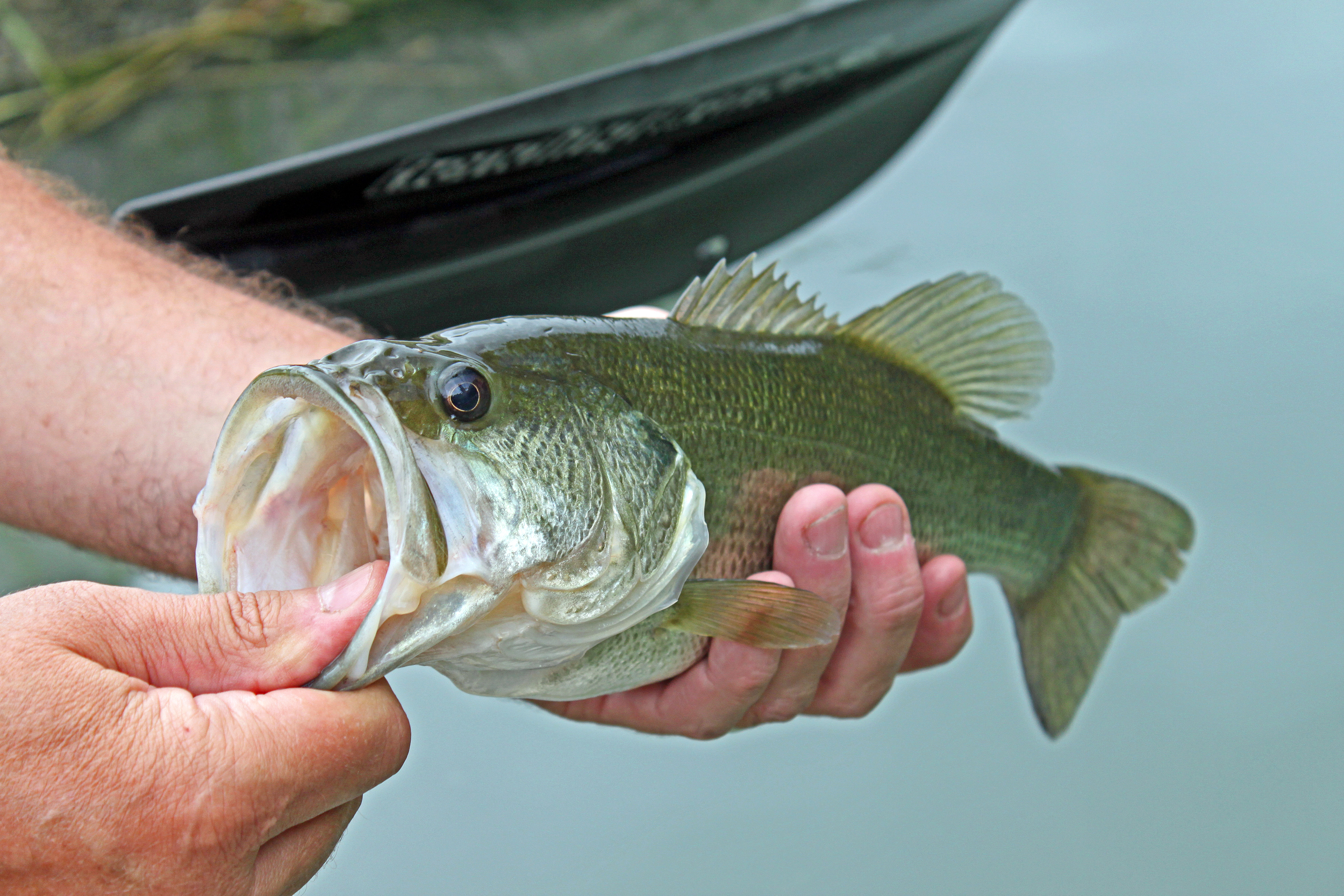 Nice two pound bass caught on the Devils River with Worden's Rooster Tail